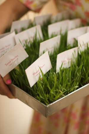 diy wheat grass escort cards